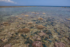 Coral Reef Exposed at Low Tide Stock Photos