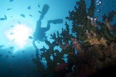 Coral Reef Exuberance fuori dal cappellano Burgos, Leyte, Filippine Immagini Stock Libere da Diritti