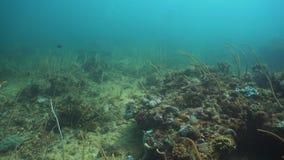 Coral Reef Filippinerna Mindoro arkivfilmer