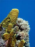 Coral reef with fire coral Stock Photo