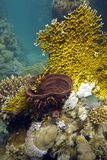 Coral reef with fire coral and sea sponge on the b Stock Image