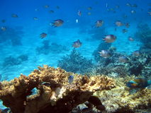 Coral reef and fish Royalty Free Stock Photo
