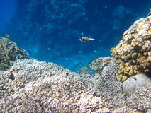 Coral reef and fish Royalty Free Stock Photography