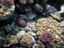 Coral reef and fish. Colorful coral reef and fish Royalty Free Stock Images