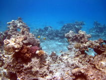 Coral reef and fish. At the Red sea Stock Photo