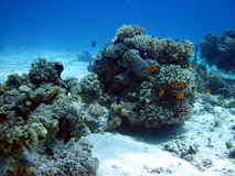 Coral reef and fish Stock Photography