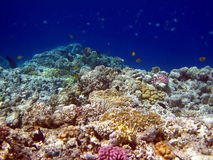 Coral reef and fish Stock Photos