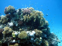 Coral reef and fish Stock Image