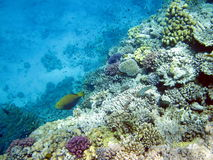 Coral reef and fish Stock Images