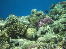 Coral reef and fish stock photo