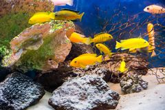 Coral reef fish in aquarium environment stock photography