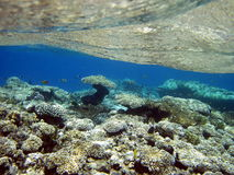 Coral reef and fish royalty free stock images
