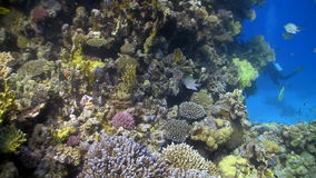 Coral reef fish stock video footage