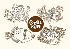 Coral reef fish and corals vector contour drawing. Vector contour drawing illustration of coral filefish reef fish and corals Royalty Free Stock Photos
