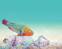 Coral reef with a fish-parrot Stock Photos