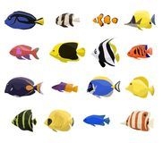 Coral reef fish set. With 16 different type of fishes Stock Image