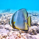 Coral reef and fish. At Seychelles Stock Images