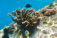 Coral reef and fish. At Seychelles Stock Photos