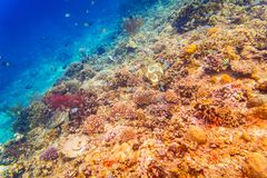 Coral reef and fish in tropical sea underwater Stock Photos