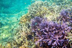 Coral reef and fish in tropical seashore. Undersea landscape photo. Marine animals of tropical shore. Coral reef underwater photo. Snorkeling in tropic. Exotic Stock Photo