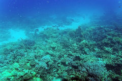 Coral reef and fish underwater. Underwater shot of coral reef and fish, Red Sea, Egypt stock photos