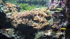 Coral Reef And Fish In Underwater Aquarium. Stock video in 4k or HD resolution stock footage