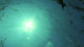 Coral Reef Fish Underwater Ocean Sea. Life Wildlife School Marine Sunlight Rays Background Beauty Gopro HD stock footage