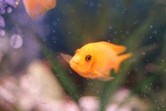 Coral reef, fish in water, golden fish. royalty free stock photography