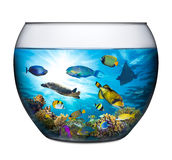 Coral reef fishbowl. Coral reef with marine animals in fishbowl Royalty Free Stock Images