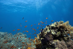 Coral reef with fishes Stock Images