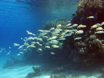 Coral reef with fishes Stock Image