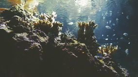 Coral Reef and Fishes. Coral reef in aquarium with tropical colorful fishes stock video