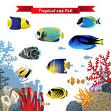 Coral reef fishes Stock Images