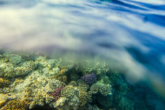 Coral reef with fishes of the red sea Stock Photos