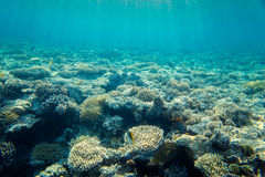 Coral reef with fishes of the red sea Stock Images