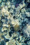 Coral reef with fishes of the red sea Stock Photo