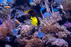 Coral reef fishes stock photo