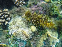 Coral reef formation on the sea bottom. White actinia and corals underwater photo.