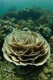 Coral Reef frágil imagens de stock