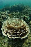 Coral Reef fragile images stock