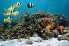 Coral reef full of fish Royalty Free Stock Image