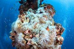 Coral reef garden in Palau, Micronesia Stock Photos