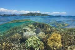 Coral reef Grande Terre Noumea New Caledonia. Above and below sea surface, healthy coral reef underwater in the lagoon of Grande Terre island off the coast of royalty free stock images