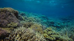 Coral reef, Great barrier reef, Australia. Underwater landscape royalty free stock photography