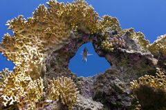 Coral reef with great coral and single exotic fish Stock Photos