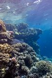 Coral reef with great hard corals at the bottom of tropical sea Royalty Free Stock Photos