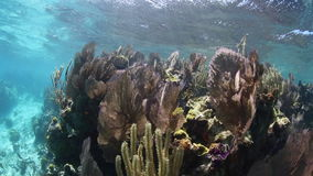 Coral Reef Growing on Edge of Blue Hole in Belize stock footage