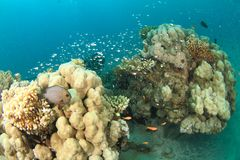 Coral reef with hard corals stock image