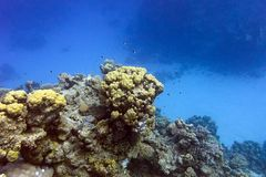 Coral reef with hard corals at the bottom of tropical sea Stock Photo
