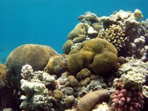 Coral reef with hard and stony corals on the botto Stock Photo